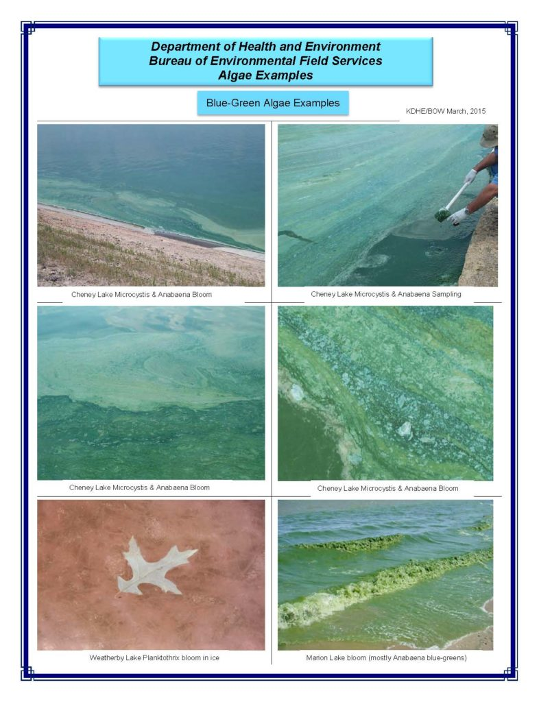 6 images of blue-green algae